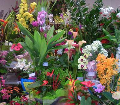 Grand choix de fleurs pour composer vous-même votre bouquet.