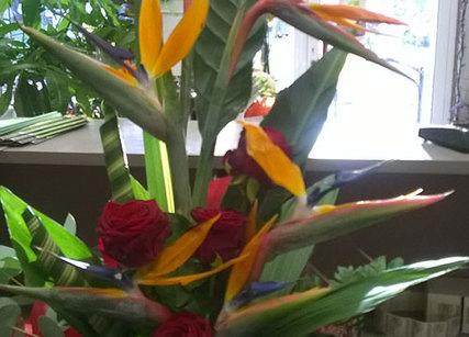 Choisissez vos fleurs exotiques