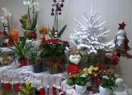 Feurs decoration pour noel