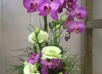 Orchidé et bambou