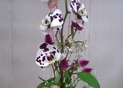 Orchidée originale pour cadeau de naissance